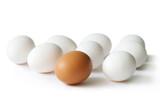 Fototapety eier