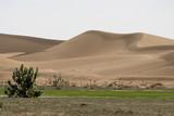 contraste dune - verdure poster
