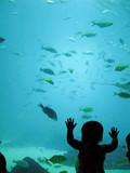georgia aquarium poster