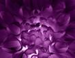roleta: magic flower
