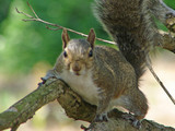 watchful squirrel poster