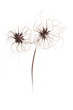 dry flower on white background5