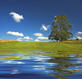 deep blue sky and tree in the field poster