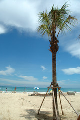 beach and palmtree