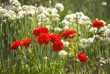 garden organic ryton ryton gardens warwickshire mi poster