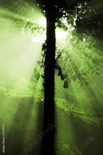 light tree - sun rays