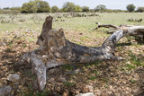 dead cottonwood poster