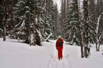 winter forest. skier with rucksack
