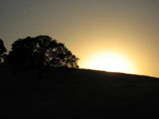 sunset and oak