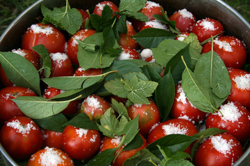 tomatoes with currant leaves and salt