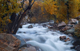 mountain stream at fall poster