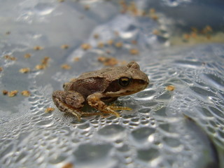 frog in drops of water