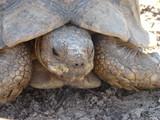 slow tortoise poster
