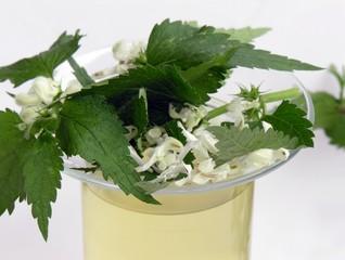 dead-nettle herb and tea