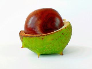 chestnut-2