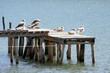 seagulls sitting