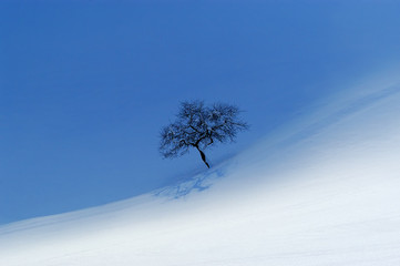 lonely apple tree in snowy landscape