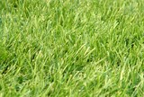lawn,grass poster