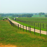cattle ranch in kentucky usa poster