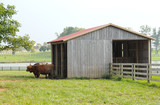 cattle ranch cowshed poster