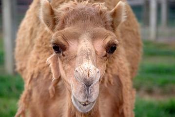 camel expression
