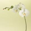 Fototapete Botanik - Single - Blume