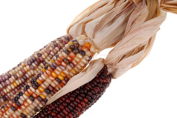 detail of colored corn with husk