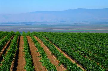 crops growing in california