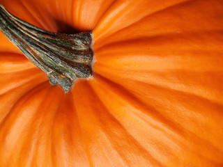 close-up of orange halloween pumpkin with green stalk