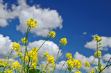rural spring meadow poster