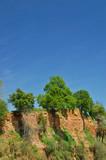 oak trees on cliff poster