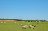 rural pasture poster