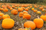 land of pumpkins poster