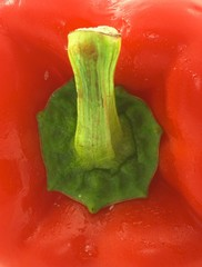 red pepper extreme closeup, portrait