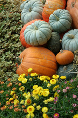 pumpkins and yellow flowers