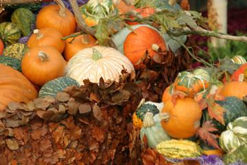 pumpkins and foliage