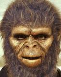 man wearing ape mask poster