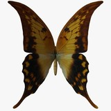 butterfly-swallow tail 2 poster