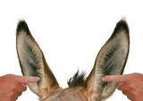 oreilles et bruit poster