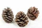 three pine cones poster