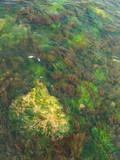 multicolored algae poster