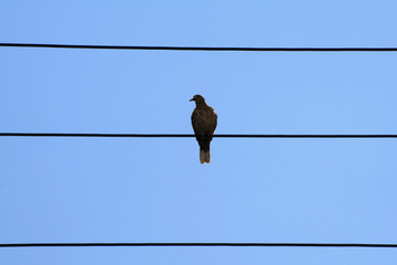 bird on wire 2