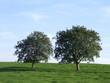 bäume /wiese