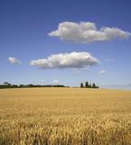 farmland warwickshire poster