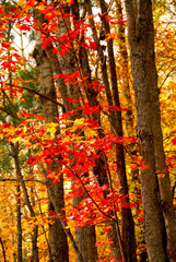 fall forest background