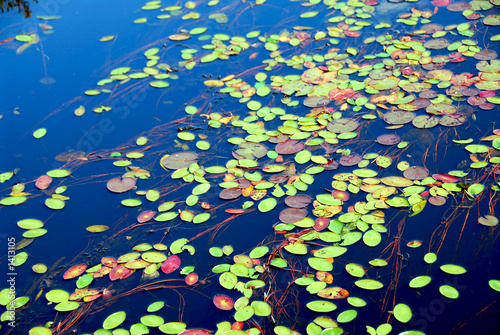 poster of lily pads