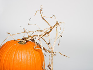 pumpkin with stem