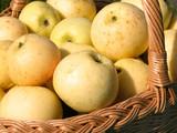 basket full of apples 2 poster
