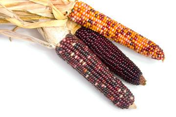 indian corn1
