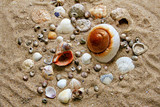 many shells on the sand poster